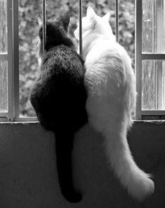 Black & White©2